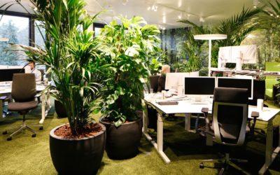 NFON – Dieci idee per lavorare senza impattare sull'ambiente